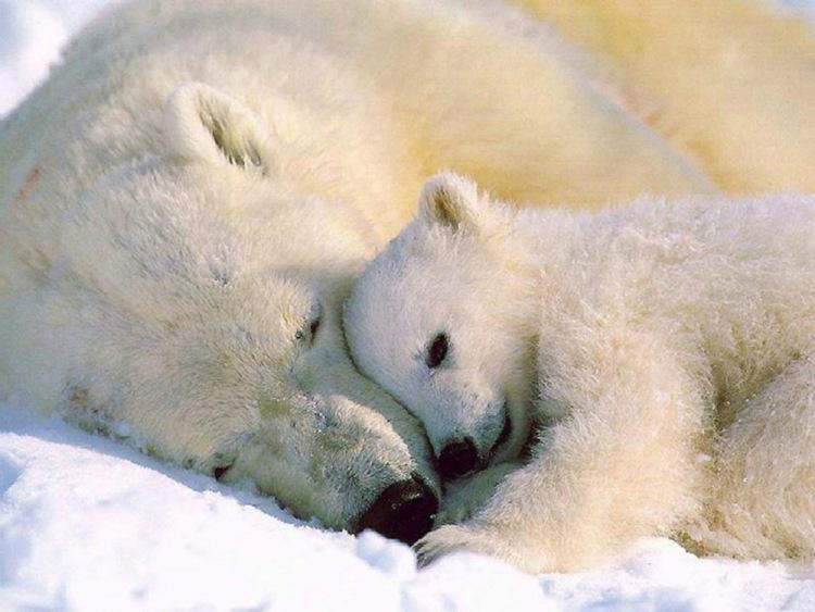 руб я люблю белых медведей сайте СтройПортал можете