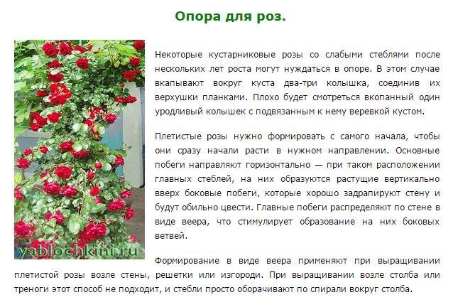розы как ухаживать весной видео