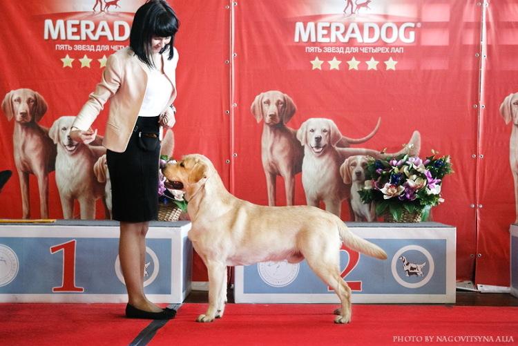 Выставка собак г